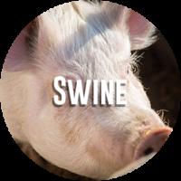 Swine Diagnostic Request Form