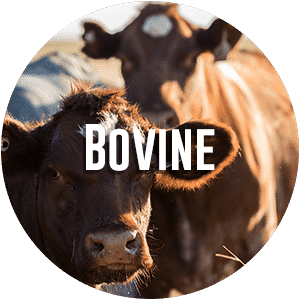 bovine-diag-request