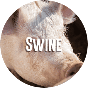 Swine Diagnostic Request Form