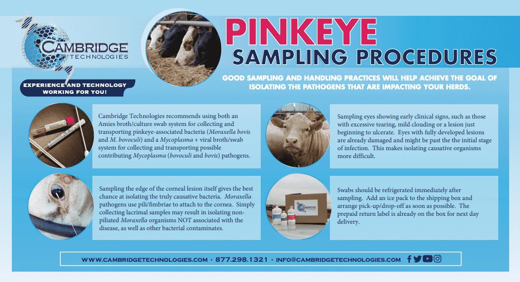 pinkeye-samplying